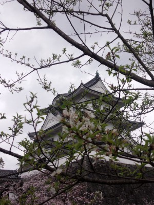 20160402淡墨桜